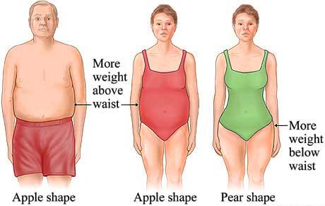 belly-fat-women-men
